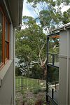 Hill Thalis Architects - Randwick Subdivision - Street view 1